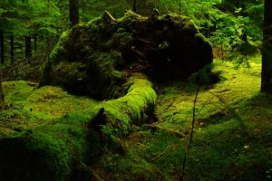 forest-483207_640